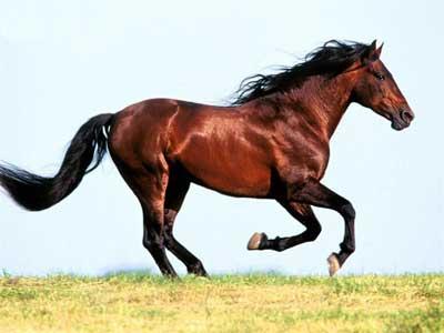 دانستنی هایی در مورد اسب
