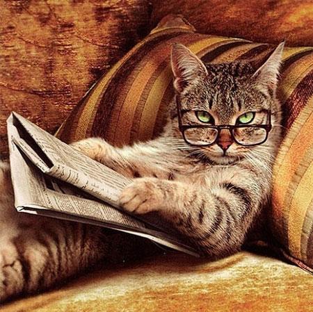 عکس های بامزه و خنده دار از حیوانات (4)