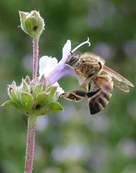 همه چیز در مورد زندگی زنبور عسل