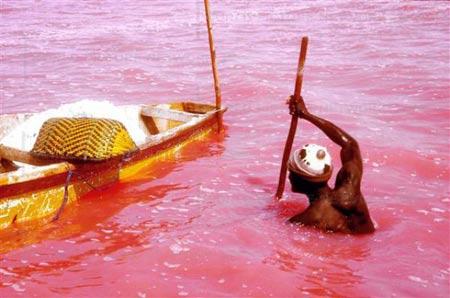 تصاویر دریاچه صورتی پدیده ای شگفت انگیز در غرب آفریقا