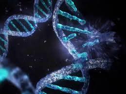 پاسخ به معمایی DNA به قدمت 150 سال