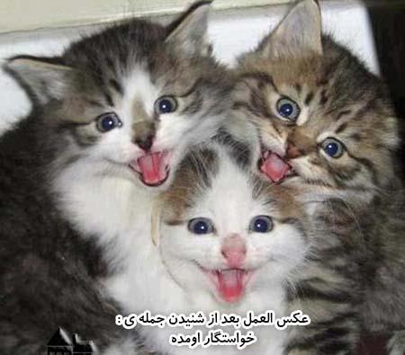 تصاویر طنز و باحال و خنده دار