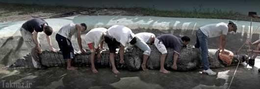 عکس های دیدنی از بزرگ ترین کروکودیل های دنیا