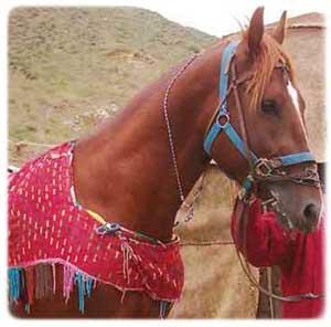 انواع نژاد های اسب را بشناسید