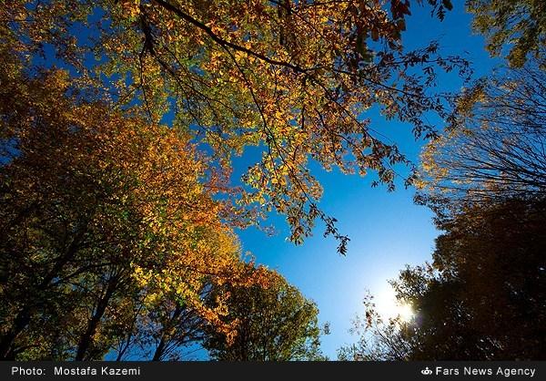 تصاویر رویایی از پاییز جنگل چمستان