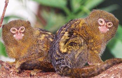 تصاویر عجیب ترین حیوانات