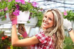 چگونه گیاهان آپارتمانی را تمیز کنیم؟