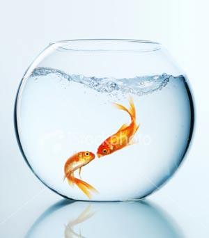 شرایط نگهداری از ماهی قرمز