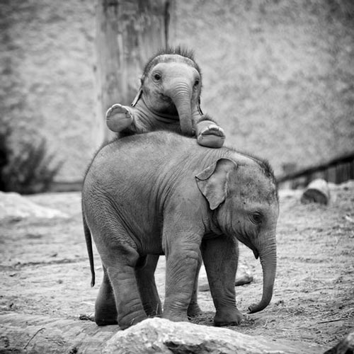 عکس های بامزه و دیدنی از حیوانات مختلف