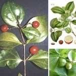 سمی ترین گیاهان جهان (عکس)