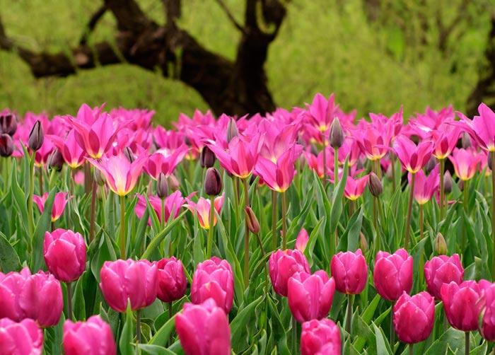 تصاویری از گل های بسیار زیبای بهاری