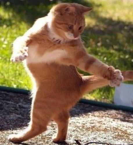 گربه رقصانی