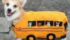 عکس های طنز از حیوانات در لباس خواب