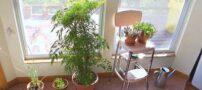 اصول آبیاری گلدان های آپارتمانی