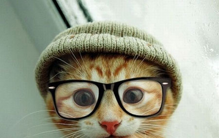 عکس های جالب و خنده دار از حیوانات «3»