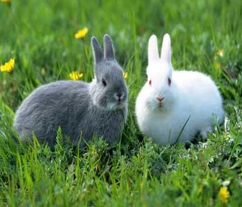 پرورش و نگهداری از خرگوش
