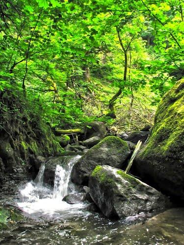 تصاویری از طبیعت زیبای حویق در گیلان