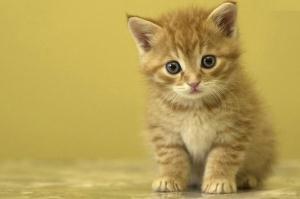 گربه ای که درآمد های میلیونی دارد + عکس
