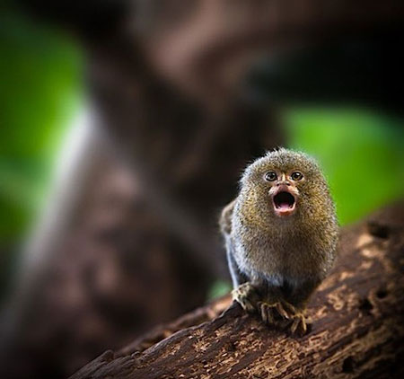 عکس های جدید و خنده دار از حیوانات