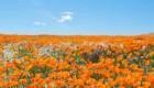 تصاویر دره زیبا و شگفت انگیز شکوفه های زرد