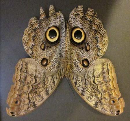 عکس های عجیب و غریب ترین حشرات دنیا