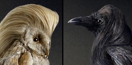 پرندگان بسیار زیبا با موهای عجیب