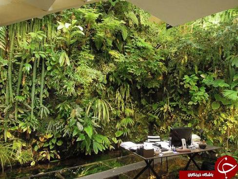 سر سبزترین حیاط دنیا + عکس