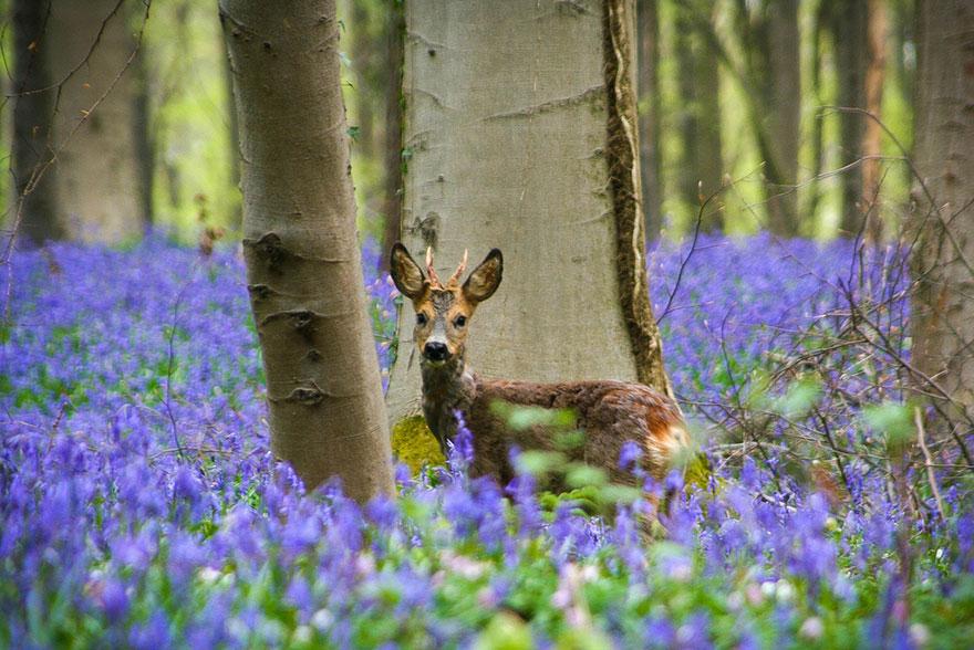 فرش گل های آبی در جنگل عرفانی