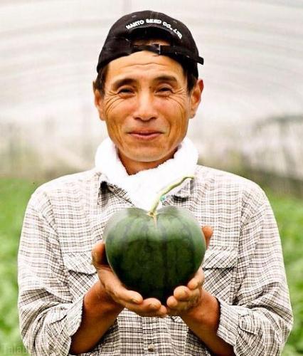 پرورش هندوانه هایی به شکل قلب (عکس)