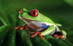 یکی از شگفت انگیز ترین موجودات دنیا