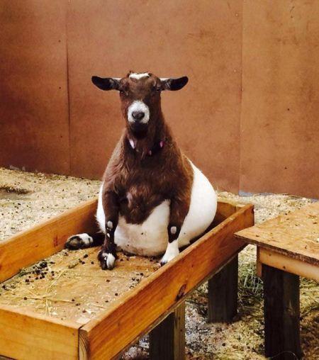 تصاویر دیدنی از حیوانات در دوران حاملگی
