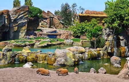 در این باغ وحش زیبا قفس معنایی ندارد (عکس)