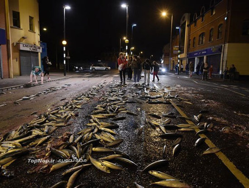 این همه ماهی وسط خیابان (+عکس)