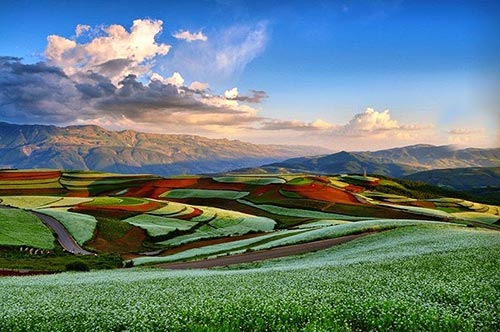 مزارع شگفت انگیز رنگارنگ در چین + تصاویر