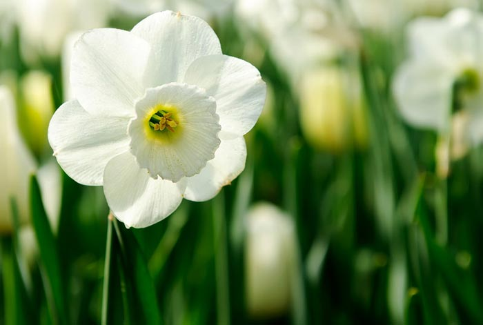 تصاویر بسیار زیبا از گل های طبیعی