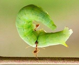 عکس های دیدنی از عجیب ترین موجود جهان