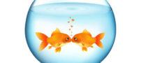 مدل های زیبای تزیین تنگ ماهی نوروز – 6