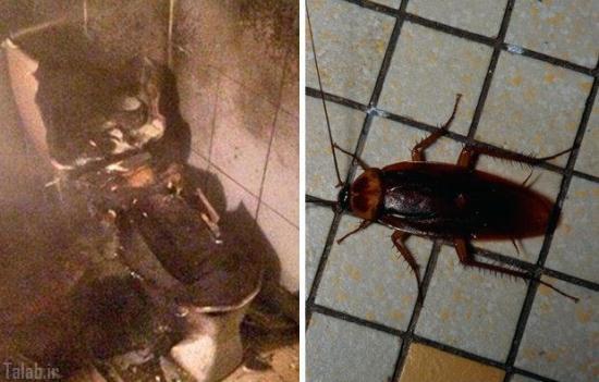 خانمی که به خاطر یک سوسک دستشویی را منفجر کرد
