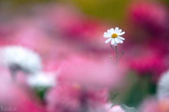 عکس های دیدنی از گل های زیبا