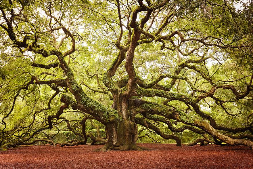 تصاویری جالب از درختان تخیلی اما واقعی
