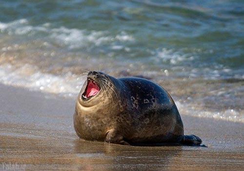 عکس های باحال و دیدنی از فک های دریایی خوش خنده