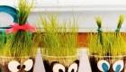 مدل سبزه آرایی جدید و معنای آن ویژه نوروز