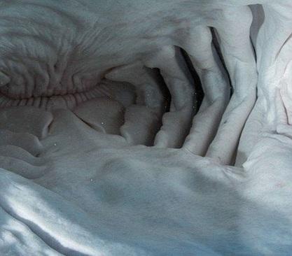 عکس هایی از درون دهان کوسه