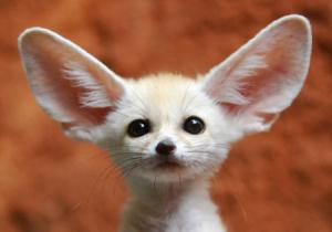عکس های بامزه و جدید از حیوانات