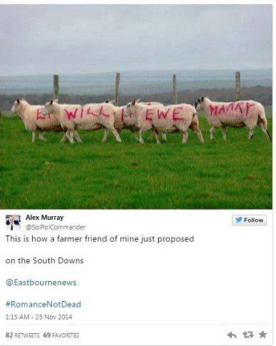 خواستگاری عجیب به کمک گوسفندان !+ عکس
