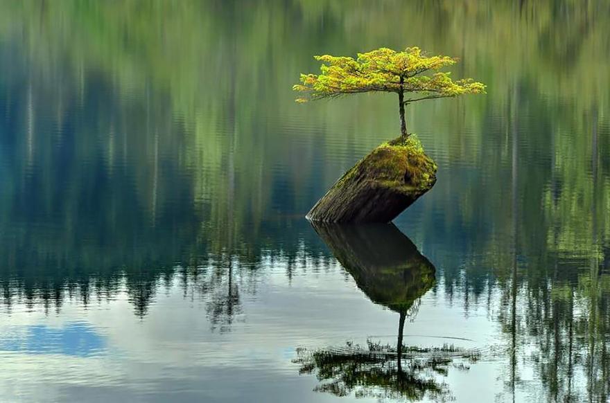 راه های جالب طبیعی برای زندگی