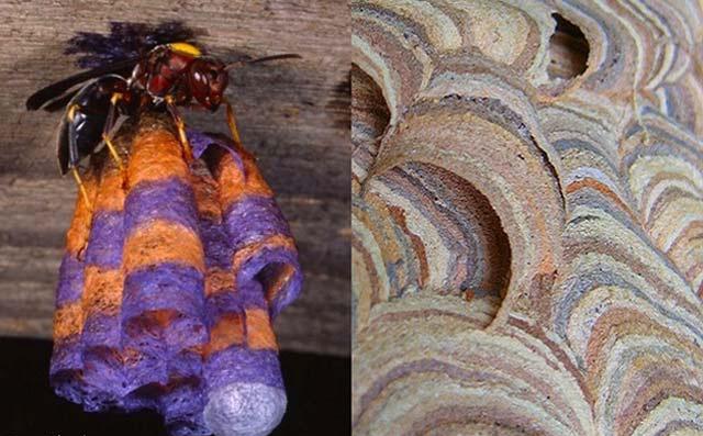 تصاویری از 10 سازه عجیب و زیبا بنا شده توسط حیوانات