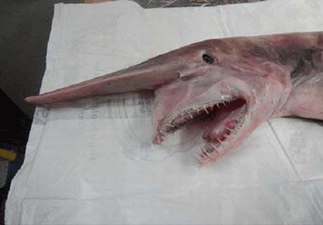 تصاویر ترسناک واقعی از دیو دریا