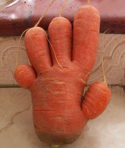 میوه ها و سبزیجات با اشکال عجیب و غریب