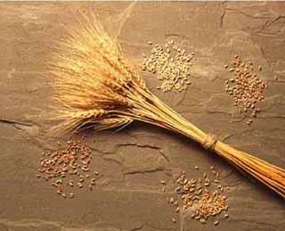 ضرب المثل هم از گندم ري افتاد، هم از خرماي بغداد